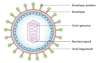 Epstein-Barr virus: The master of disguise